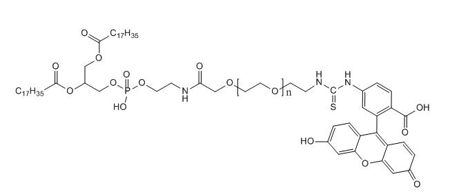 FITC-PEG-DSPE 荧光素-聚乙二醇-磷脂 MW:2000