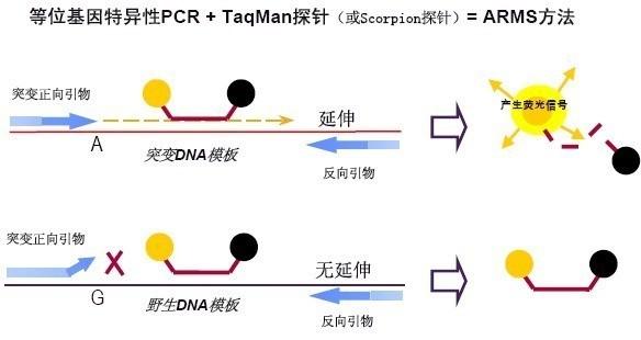 绵羊源性成分探针法荧光定量PCR检测试剂盒
