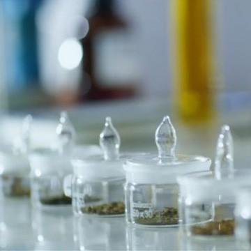 白藜芦醇工厂