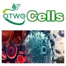 697(人前B细胞白血病细胞)