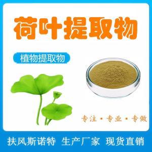 荷叶萃取物 10:1比例提取 荷叶粉