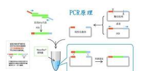 短古柏线虫探针法荧光定量PCR试剂盒 产品图片