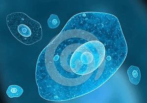 小鼠胚胎干细胞G-Olig2(干细胞库保藏)说明书 产品图片