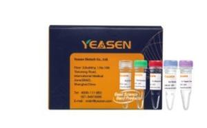 Hieff NGS® Fast Tagment DNA Library Prep Kit  12207ES