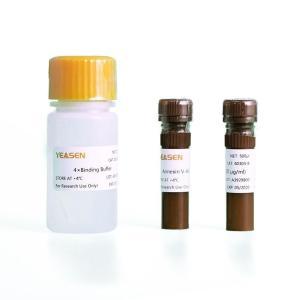 Annexin V-Alexa Fluor 647/PI 凋亡检测试剂盒  40304ES