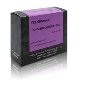 TUNEL Apoptosis Detection Kit (FITC) TUNEL细胞凋亡检测试剂盒 40306ES 产品图片