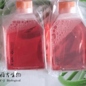 STO小鼠胚胎纤维细胞价格
