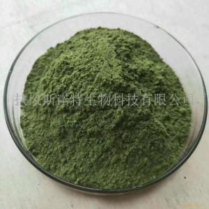 小球藻粉 破壁小球藻提取物 蛋白核小球藻粉厂家