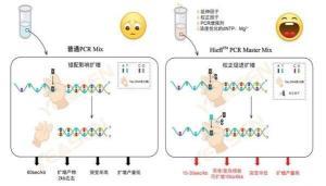 人基质金属蛋白酶抑制因子3(TIMP-3)ELISA检测试剂盒厂家 产品图片