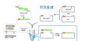 人氧化低密度脂蛋白(OxLDL)ELISA检测试剂盒说明书 产品图片