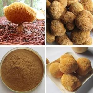 猴头菌粉现货直接发猴头菇