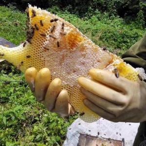蜂蜜粉厂家现货