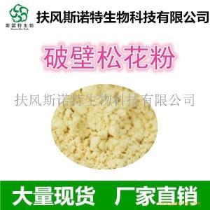 破壁松花粉98% 厂家批发 松花粉 马尾松花粉
