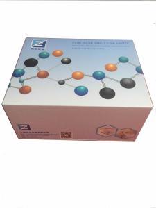 大鼠乳腺癌标志物-CA153ELISA试剂盒 产品图片