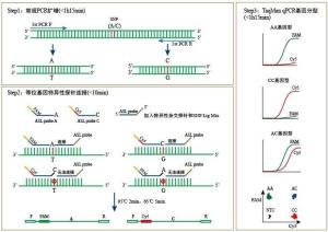 真鲷虹彩病毒探针法荧光定量PCR试剂盒产品图片
