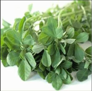 香豆子粉馍馍苦豆粉调料葫芦巴子粉