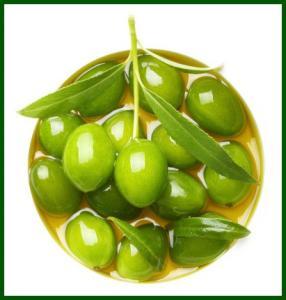 油橄榄树提取物 橄榄苦甙40%