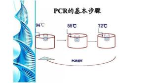 伊氏锥虫(TE)核酸检测试剂盒价格 产品图片