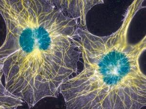 鸭脏器组织淋巴细胞分离液试剂盒规格产品图片