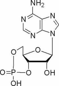 环磷酸腺苷60-92-4产品图片