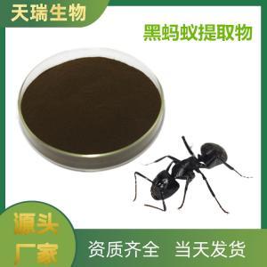 黑蚂蚁提取物 生产供应 黑蚂蚁浓缩粉