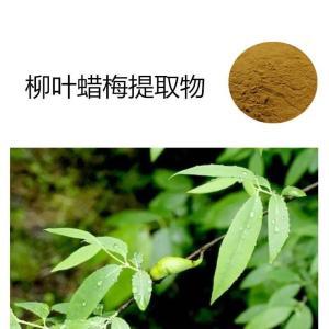 柳叶蜡梅提取物 新资源食品厂家