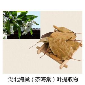 湖北海棠叶提取物  茶海棠