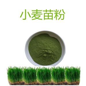小麦苗粉 新资源食品原料