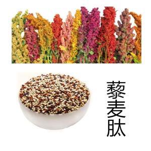 藜麦肽 食品藜麦蛋白 天瑞现货